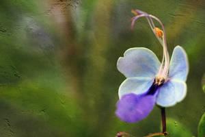 Macro Flowers-335 by Vividlight
