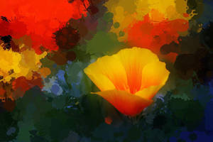 Poppies popping by Vividlight