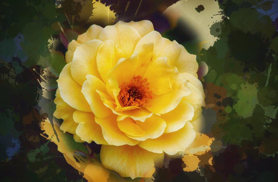 Hello beauty by Vividlight