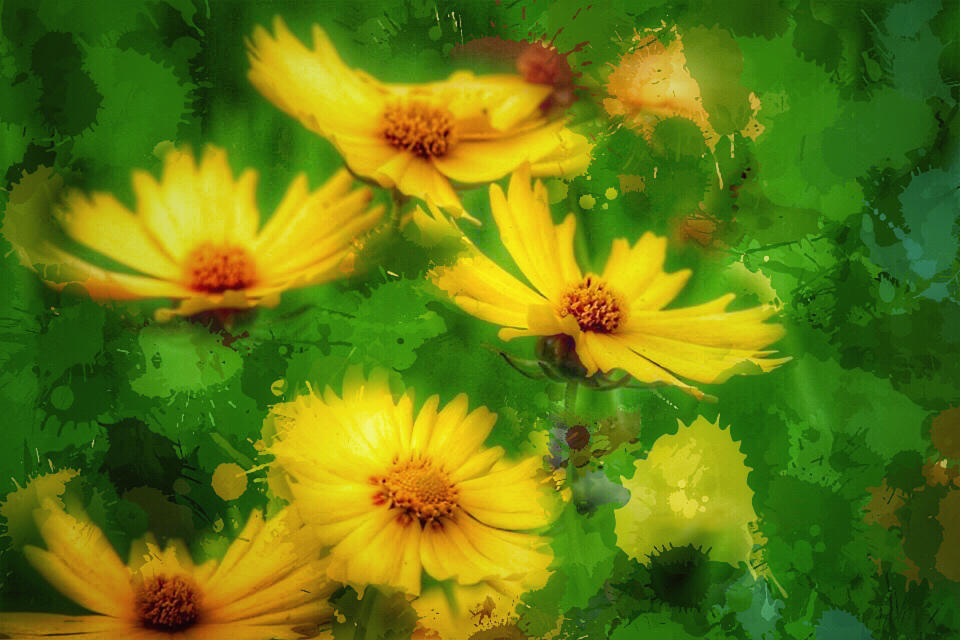 Yellow flowers by Vividlight