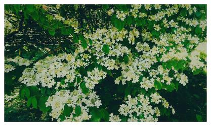 Flowers by BezNickovva