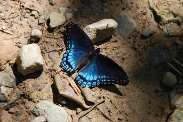 Sardonic Blue by GONE-EVERLONG