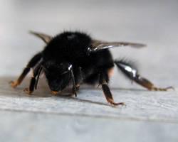 Drunken Bee by recurring