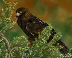 Golden Eagle by Dragonflm61