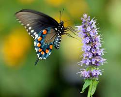 Butterfly #2 by GDKPhotography
