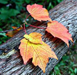 Leaves on Log by Mistrals
