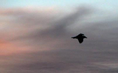Bird Has Flown by Nookster