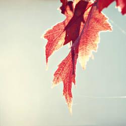 Hearth of Fall by DismayedSense