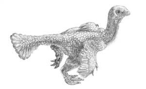 Ningyuansaurus by reminegrest