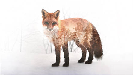 Double Exposure Fox (Wallpaper) by Dessins-Fantastiques