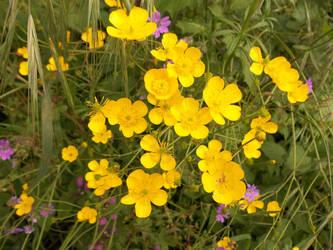 Florecillas amarillas by amayuscula