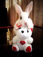 Bunny by madam-lara-croft