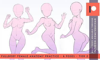 Anatomy tier - New patreon reward by SquChan