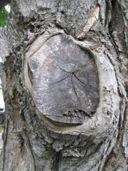 In memory of a Tree by ShayArtz