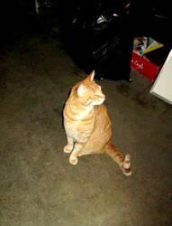 It's a Cat 2 by ShayArtz