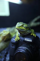 It's my camera! by Reptilesrul