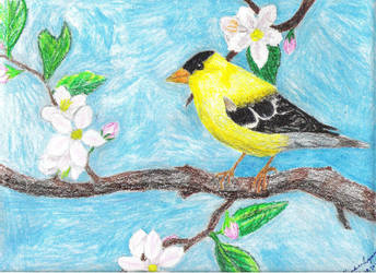 Goldfinch by redstarrose