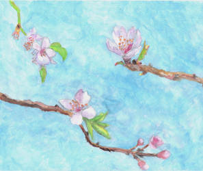 Almond Blossoms by redstarrose