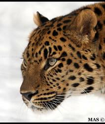 Leopard _1330 by MASOCHO