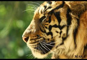 Sumatran_5160 by MASOCHO