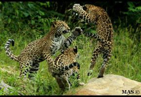Playful Cubs_3756 by MASOCHO