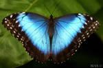 .:Blue:. by MASOCHO