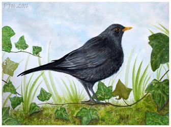 The Blackbird by PhilipHarvey