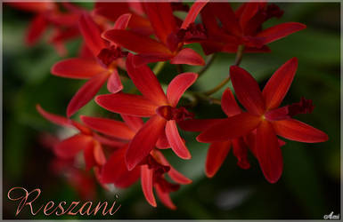 Reszani by Shitani