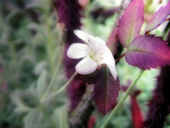 Like a flower... by vlSilfver