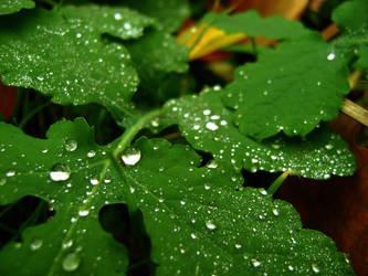 fresh green by Valentin-JSF