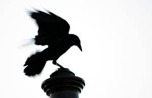 Bird by cabstiv