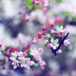 it smells like spring by Julietsound