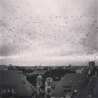 Birds. by Pokakulka