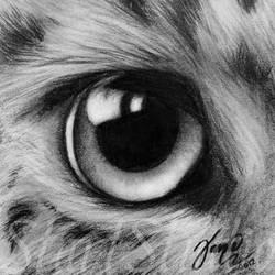 Leopard Eye by JamiePickering