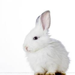 .rabbit. by b-photo