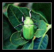 Green 1 by BillyOregon