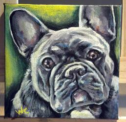 Pet Portrait of Elwood by beachrain