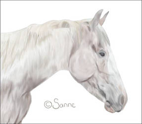 Paint horse by S-annee