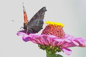 Butterfly by OldMan1948