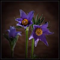 Flower by OldMan1948