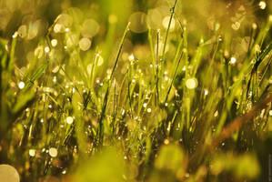 grass. by Vetera