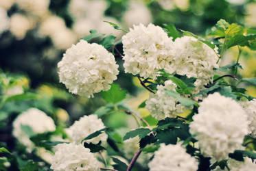 cvetaj. by Vetera