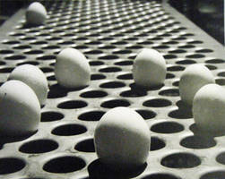 Egg Circle by brightspring