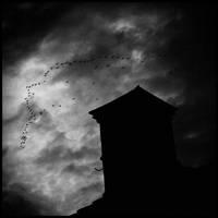 random skies by owl