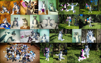 Husky  Collage. BY  Aqua_man  (c) by yiffFox