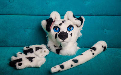 Dolmatian FURSUIT for sale by Larry (c) by yiffFox