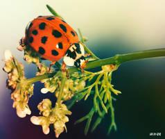 The ladybird by Lucia-Izar