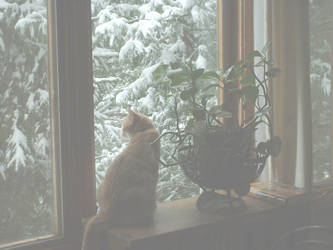 Romulus on a Snow Day by Tansatheon