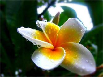 Fresh Rain by amburger91