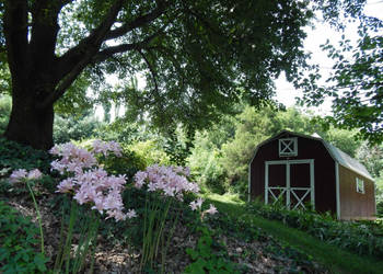 A Shed and Flowers by Artlune